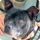 Adopt A Pet :: Jaisey