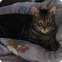 Adopt A Pet :: Zack - San Jose, CA