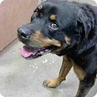 Adopt A Pet :: *DARCY - Sacramento, CA
