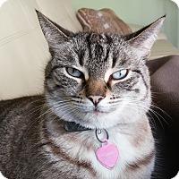 Adopt A Pet :: Ricki - Toronto, ON