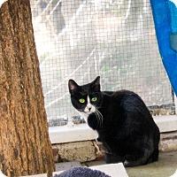 Adopt A Pet :: Butchie - Huntington, NY
