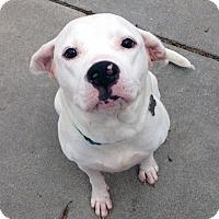 Adopt A Pet :: Fergie - Detroit, MI