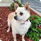 Adopt A Pet :: Baylor