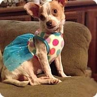 Adopt A Pet :: Ruby 2 - Las Vegas, NV