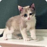 Adopt A Pet :: Reba - Austin, TX