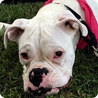 Adopt A Pet :: Vladimir 6-2016 Updated Pix - Turnersville, NJ
