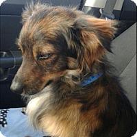Adopt A Pet :: Dalton - Las Vegas, NV