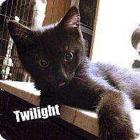 Adopt A Pet :: Twilight - Bensalem, PA