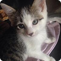 Adopt A Pet :: Gretchen - Ephrata, PA