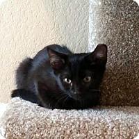 Adopt A Pet :: Nibbler - Chandler, AZ