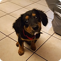 Adopt A Pet :: Lucy Baby - New Oxford, PA