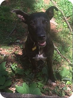 Shepherd (Unknown Type)/Boxer Mix Dog for adoption in Decatur, Georgia - Mickey