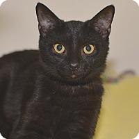 Adopt A Pet :: Moon - Medina, OH