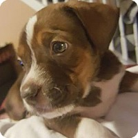 Adopt A Pet :: Bowie - Burlington, NC