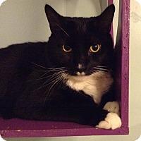 Adopt A Pet :: BB - Brimfield, MA
