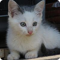 Adopt A Pet :: Spot - Unionville, PA