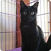 Adopt A Pet :: Ross - Sharon Center, OH