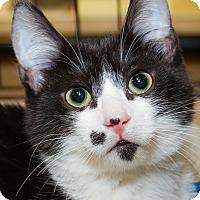 Adopt A Pet :: Zetsu - Irvine, CA