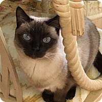 Adopt A Pet :: Pandora - Charlotte, NC