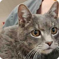 Adopt A Pet :: TIPSON - Missoula, MT