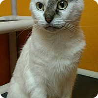 Adopt A Pet :: Sanford - Elyria, OH