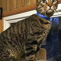 Adopt A Pet :: Milo - Hanna City, IL