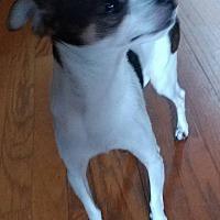 Adopt A Pet :: Beans - Matthews, NC