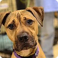 Adopt A Pet :: Sahara - Rockaway, NJ