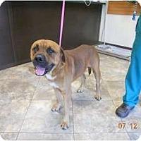 Adopt A Pet :: Glades - miami beach, FL