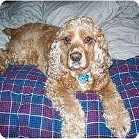 Adopt A Pet :: Dylan - Tacoma, WA