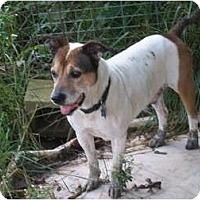 Adopt A Pet :: Duke - Albany, NY