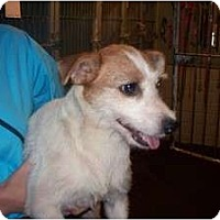 Adopt A Pet :: Emma in Nava Sota - Houston, TX