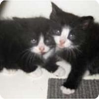 Adopt A Pet :: Nip and Tuck - Dallas, TX