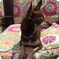 Adopt A Pet :: Jake - Petaluma, CA