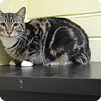 Adopt A Pet :: Marcia - Edwards AFB, CA