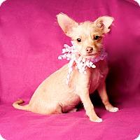 Adopt A Pet :: Becky - Irvine, CA