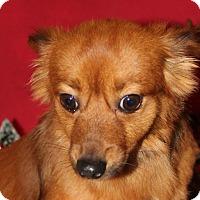 Adopt A Pet :: Teddy - Waldorf, MD