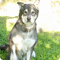 Adopt A Pet :: Chance - Loomis, CA