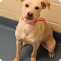 Adopt A Pet :: Aspen - Memphis, TN