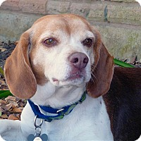 Adopt A Pet :: Luke - Houston, TX