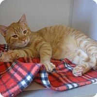 Adopt A Pet :: Dash - Manning, SC
