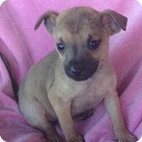 Adopt A Pet :: Elliana - Hagerstown, MD
