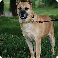 Adopt A Pet :: Nigella - Portland, ME