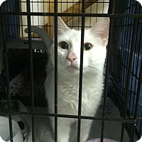 Adopt A Pet :: Pearl - Byron Center, MI