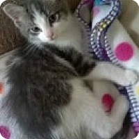 Adopt A Pet :: Nelly - McHenry, IL