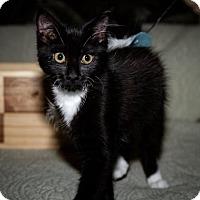 Adopt A Pet :: J.Z. Redland - BROOKSVILLE, FL