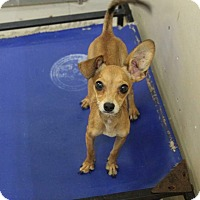 Adopt A Pet :: Tiffany - Middlebury, CT