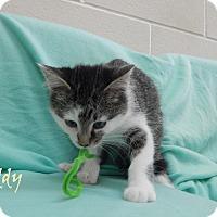 Adopt A Pet :: Freddy - Bucyrus, OH