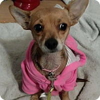 Adopt A Pet :: CALLIE - Beaumont, TX