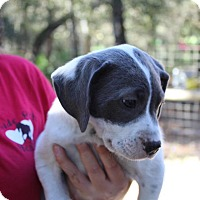 Adopt A Pet :: meadow - Groveland, FL
